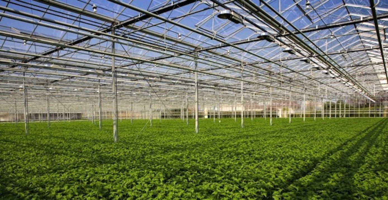 Die Gewächshäuser der Gebrüder Meier werden das reine CO2 kaufen, um das Pflanzenwachstum zu verbessern.