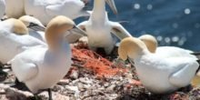 Der Plastikmüll hat die Arktis erreicht