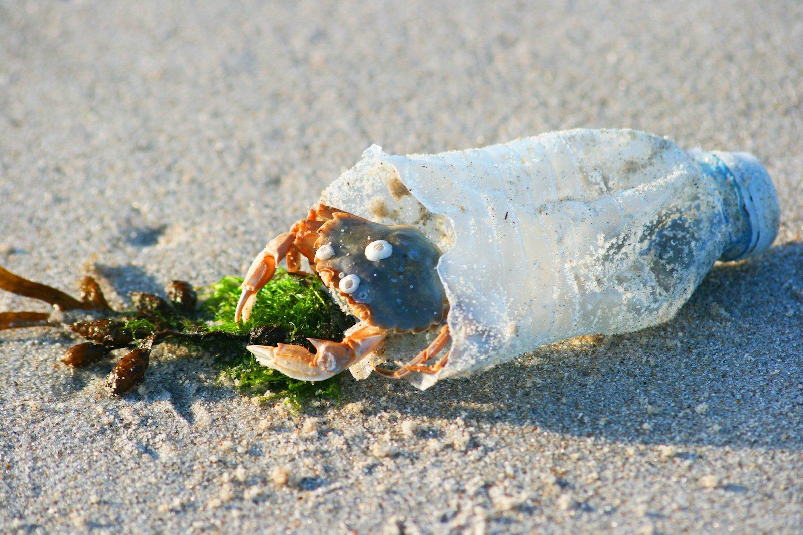 Kunststoffe bedrohen zunehmend die Meeresökosysteme.