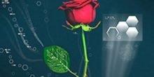 Cyborg-Rosen: Forscher verpassen lebenden Pflanzen elektrische Leitungen