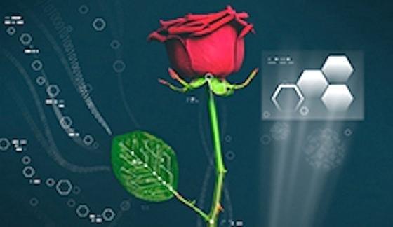 Romantischer Liebesbeweis cyborg forscher verpassen lebenden pflanzen elektrische