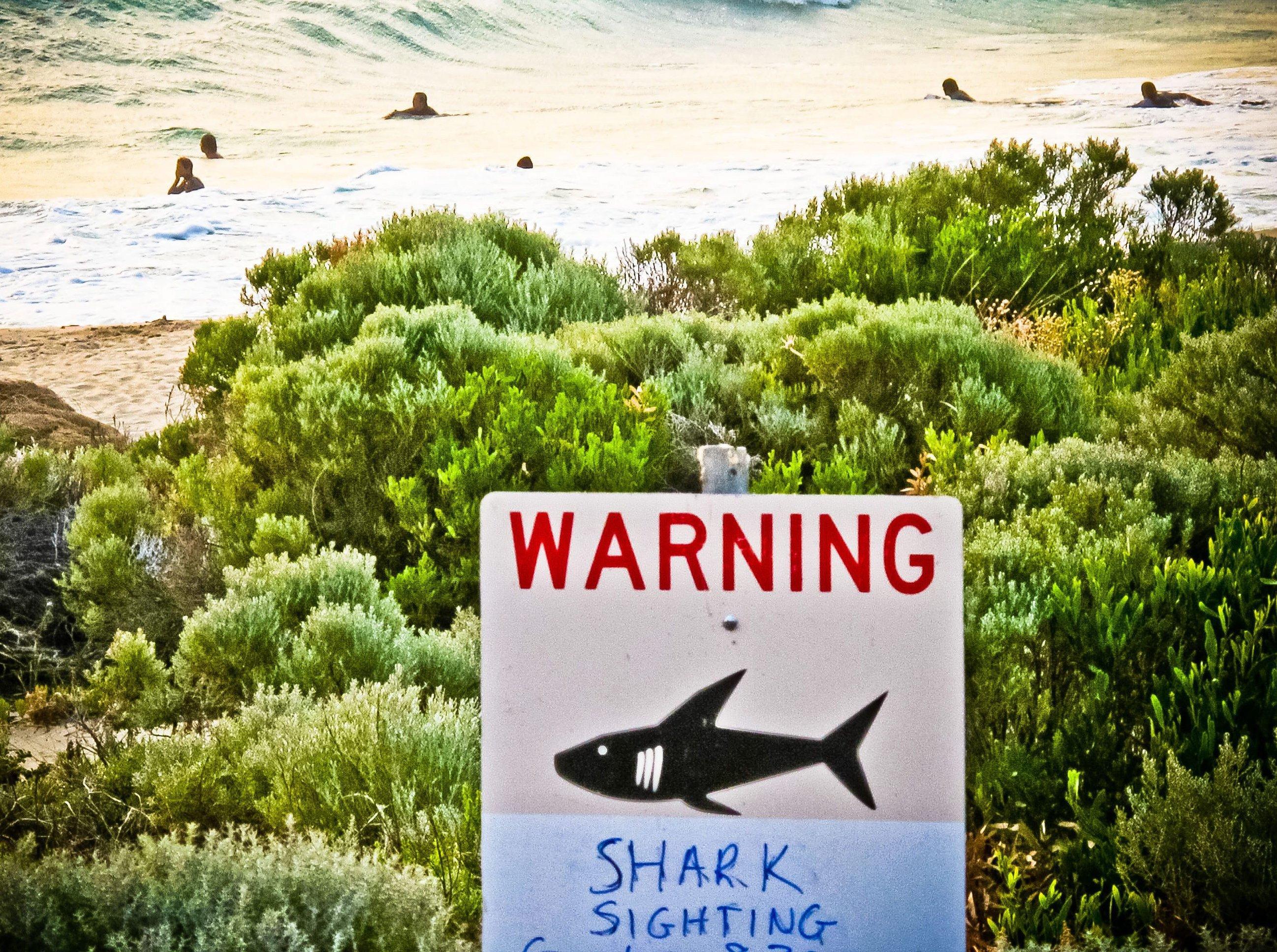 Hai-Alarm: Australien testet aktuell Drohnen in Küstennähe, die an eine Leitstelle die genaue Position eines gesichteten Hais melden. Diese informiert die Rettungsschwimmer der betroffenen Strände, so dass umgehend Sicherheitsmaßnahmen eingeleitet werden können.