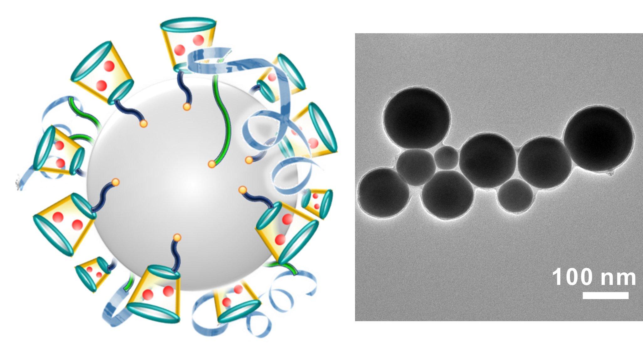 Links ist eine schematische Darstellung der krebsbekämpfenden Nanopartikel zu sehen. Das Chemotherapeutikum Doxorubicinist in Rot abgebildet. Die rechte Aufnahme zeigt die Nanopartikel durch ein Elektronenmikroskop fotografiert.