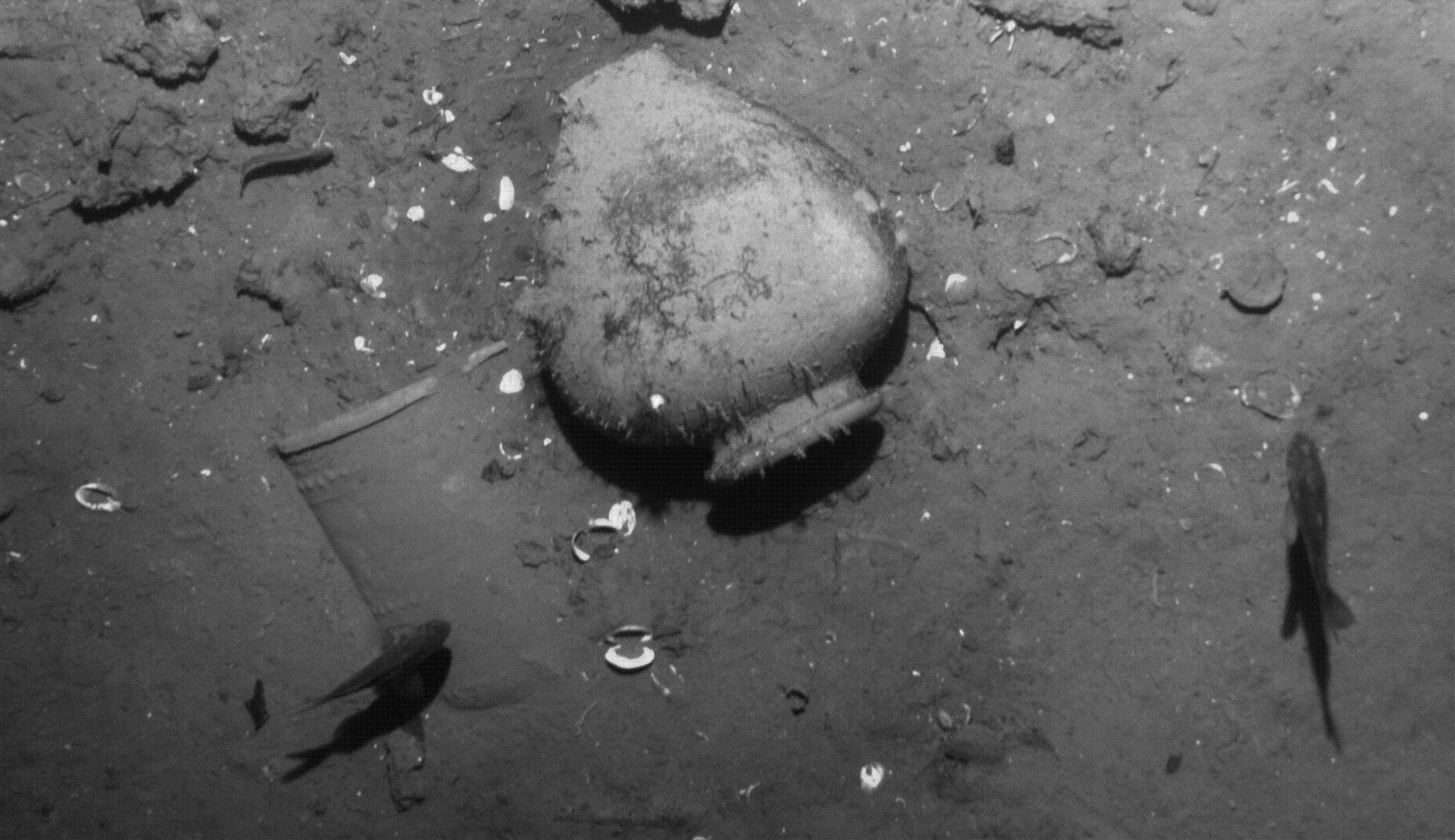 Vor gut einer Woche haben Archäologen den wohl größten Schatz der Welt entdeckt: Vor 307 Jahren ist das spanische Schiff San José gesunken – mit elf Million Gold- und Silbermünzen an Bord. Die Münzen hatten ein Gewicht von 344 t.