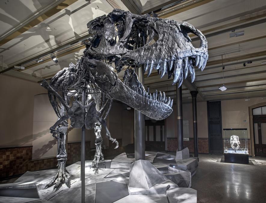 Orginal zu schwer: T-Rex-Schädel kommt aus dem 3D-Drucker