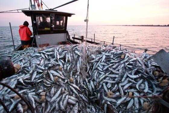 Heringsfischer im Greifswalder-Bodden: Hering nimmt deutlich weniger Plastikpartikel mit der Nahrung auf als die Makrele.