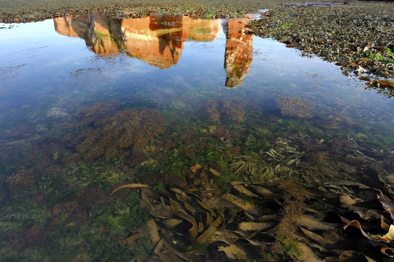 Felswatt vor Helgoland: Auf dem Tang haften die Plastikpartikel, die dann von Schnecken aufgenommen, aber auch wieder vollständig ausgeschieden werden.