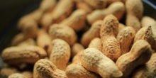 Biofilter aus Erdnussschalen holen Schadstoffe aus der Luft