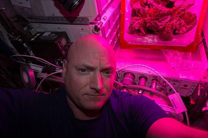 Selfie von ISS-Astronaut Scott Kelly: Die Aufnahme ist vom August 2015. Im Hintergrund ist auf der Raumstation gezüchteter Salat zu sehen.