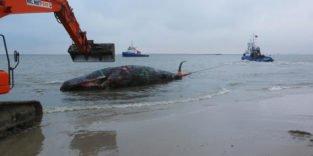 Steigender Lärm im Mittelmeer macht Walen und Delfinen zu schaffen