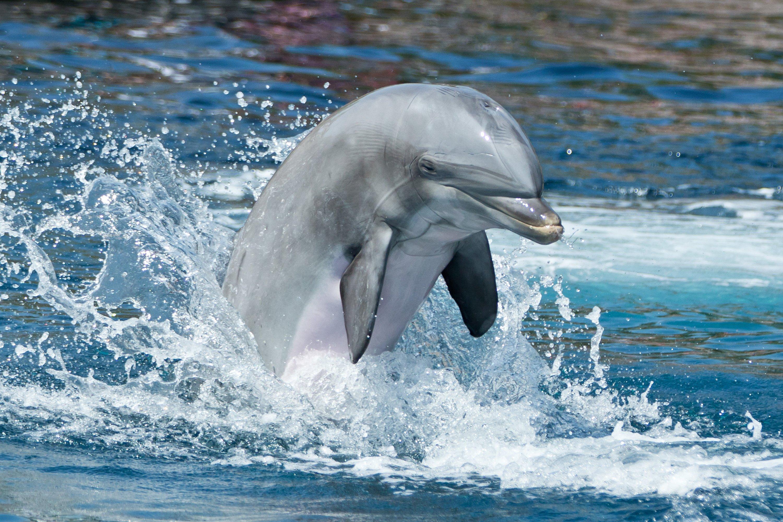 Auch Flipper und Co. können Probleme bekommen, wenn es im Wasser zu laut ist. Spanien will deswegen Schutzkorridore einrichten.