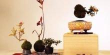 Schwebende Zwergbäume für Zuhause gefällig?