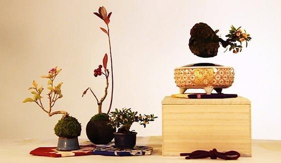 Bonsai können jetzt schweben. Wurde ja auch Zeit. Schließlich ist der Baum in der Schale als Kunstform in Teilen unter dem Einfluss des japanischen Zen-Buddhismus entwickelt worden. Bekannt ist die Bonsai-Kunst bereits seit über tausend Jahren. Übrigens kann jede Baumart verwendet werden, um einen Bonsai daraus zu gestalten.