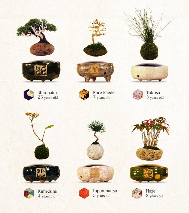 So unterschiedlich sehen die angebotenen schwebenden Bonsai-Bäumchen aus.
