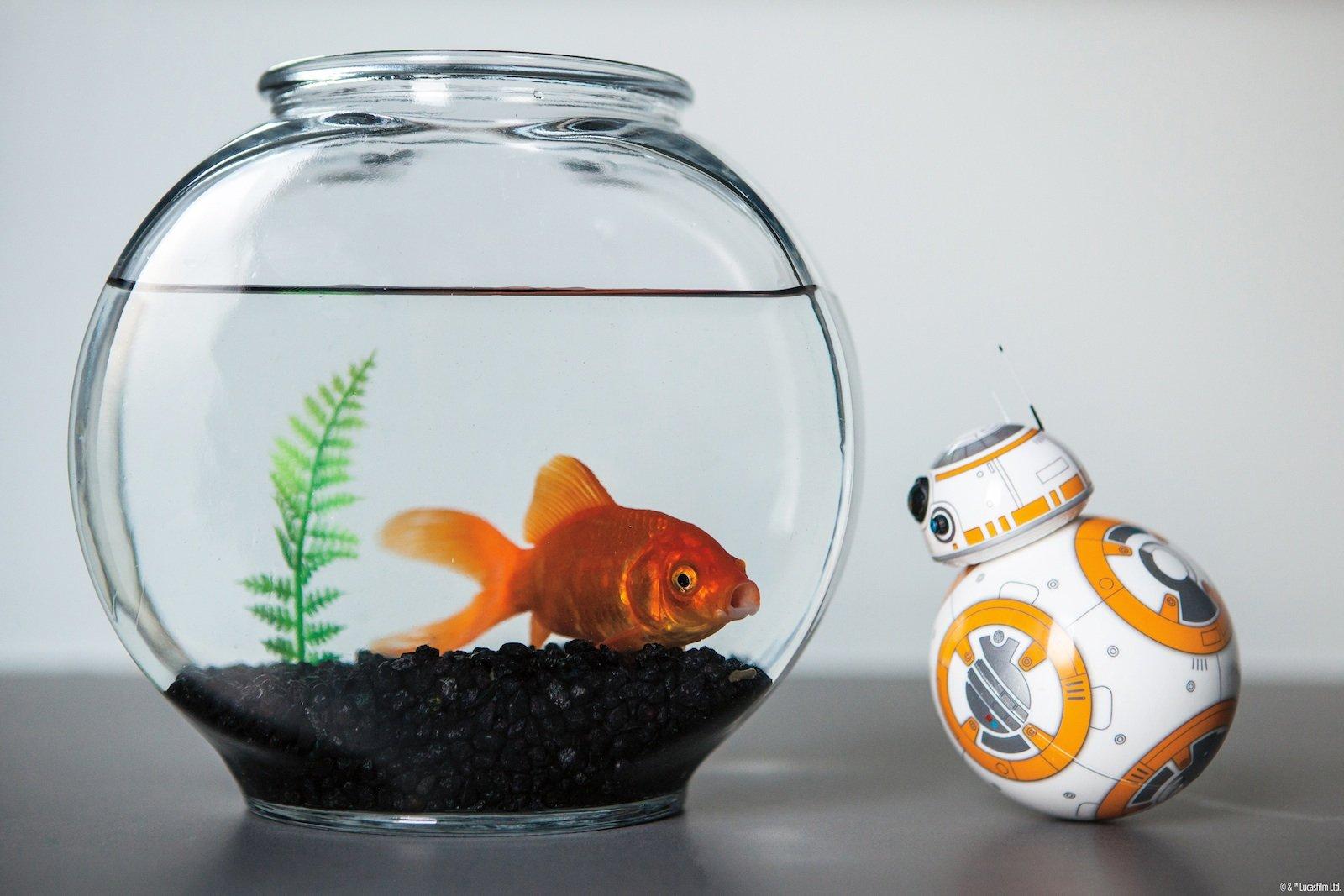 """Der jüngsten Star-Wars-Produktion entsprungen:Roboter BB-8.Das Unternehmen Sphero hat den sympathischen, kugeligen Roboter aus """"Das Erwachen der Macht""""im Kleinformat nachgebaut."""