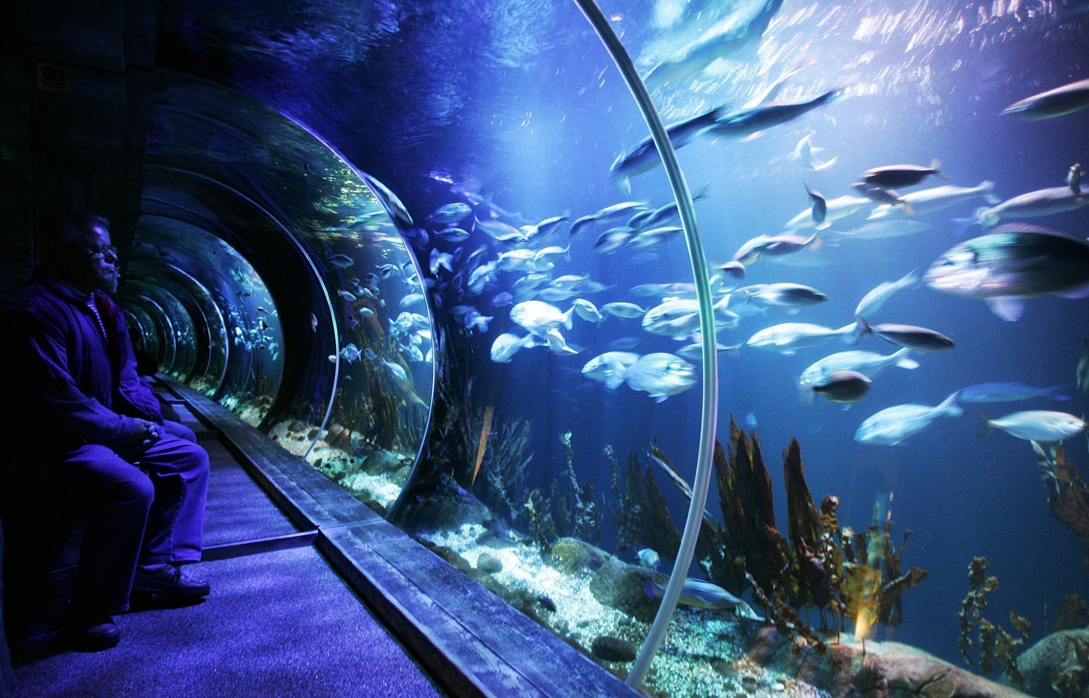 Schwarmintelligenz soll es nicht nur bei Fischen geben. Auch Bahnreisende neigen gelegentlich dazu, diese zu entwickeln.