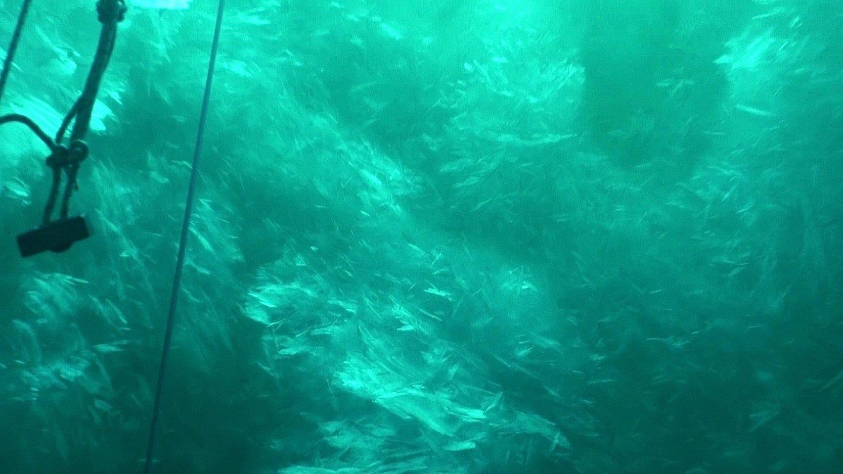 Der größte Cocktail des Meeres: Wie Crushed Ice wirken die Schichten unter dem Schelfeis der Antarktis, in denen sich Wasser und Eissplitter zu einer Eissuppe vermischen. Sie ist Schutz- und Lebensraum für kleinste Krebse und Fische. Sie sind Lebensgrundlage für größere Meeresbewohner.