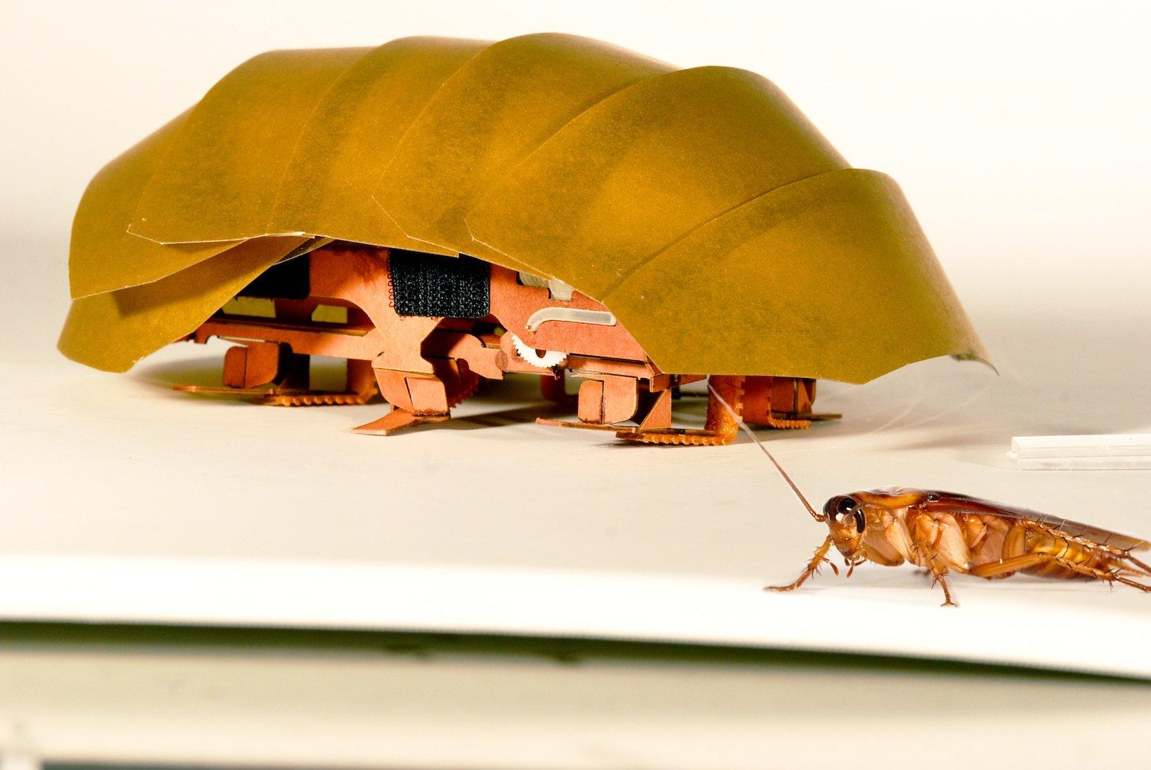 Der handflächengroßeMiniroboter CRAM ist nach dem Vorbild von Kakerlaken gebaut und soll künftig Verschüttete erreichen. Dabei könnten Sie auch klären, ob beispielsweise Schuttberge stabil genug sind, damit auch Helfer vordringen können.