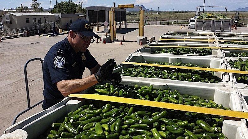 Ein US-Zöllner kontrolliert an einem Grenzübergang eine Lieferung Paprikaschoten aus Texas. Der mobile Sensor soll in Zukunft die Geruchsmoleküle versteckter Geldscheine erkennen.