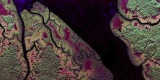 Gabuns Regenwald in der Radarfalle deutscher Forscher
