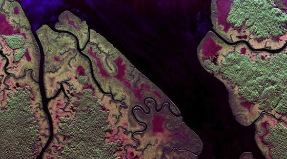 Im Pongara-Nationalpark gibt es noch große Flächen unberührten Mangrovenwalds, der weiter im Landesinneren an dichten Regenwald angrenzt. Die Farbgestaltung spiegelt unterschiedliche Arten der Rückstreuung des Radarsignals wider. Werden die Signale im L-Band (23cm Wellenlänge) vowiegend von vegetationsfreien Oberflächen (Wasser, freie Felder) erscheinen sie im Bild blau. Eine überwiegende zweifache Rückstreuung (z.B. an den vertikalen Mangrovenstämmen und der Wasseroberfläche) wird rot angezeigt. Und eine vorherrschend ungerichtetete Rückstreuung, insbesondere aus dem Volumen der Baumkrone des Regenwalds erscheint grün.