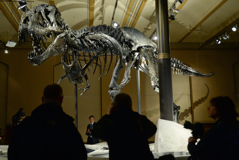 Das Skelett des Tyrannosaurus Rex namens Tristan im Naturkundemuseum in Berlin: Als virtuelles Wesen wird er als Attraktion auf der Cebit 2016 zu sehen sein.