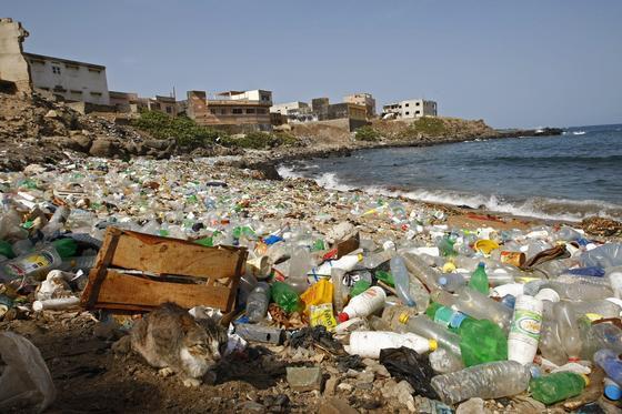 PET-Flaschen am Strand von Ngor im Senegal: Japanische Forscher haben eine Bakterienart entdeckt, die PET zersetzen kann.