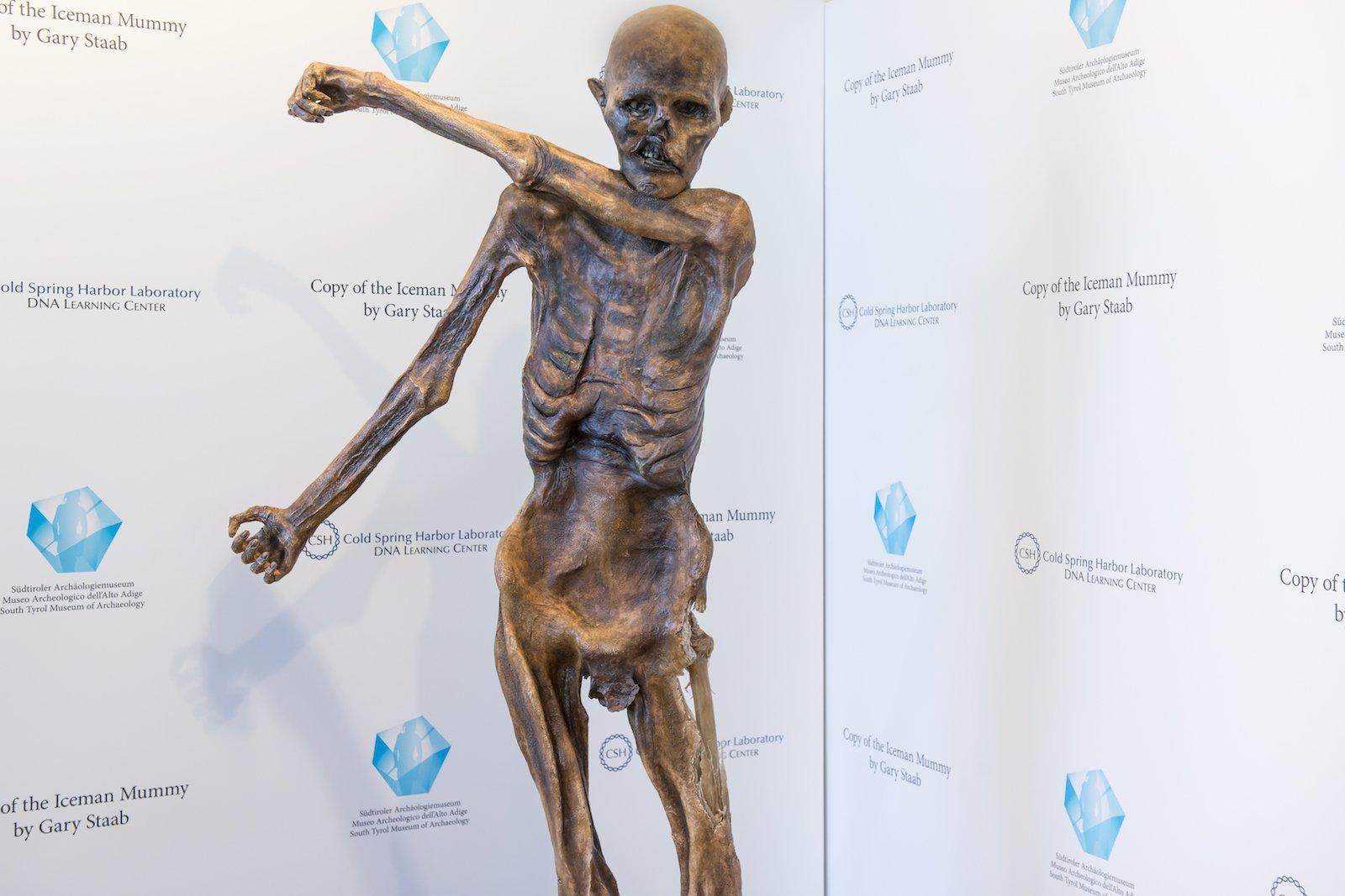 Die fertige 1:1-Kopie von Ötzi.