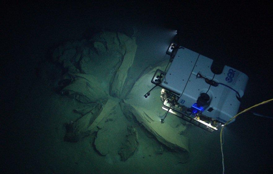Tauchroboter D2 ist derzeit auf Expedition im Marianengraben und hat mit seinen Kameras in 3700 m Tiefe eine bislang unbekannte Quallenart aufgenommen. Das Nesseltier sieht aus wie eine moderne Lampe und leuchtet auch so.