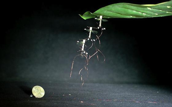 Die Drohne kann sich mit einer Elektrodenplatte an Blättern festhalten. Dieser physikalische Effekt tritt auch bei einem Luftballon auf, der Haare anzieht.