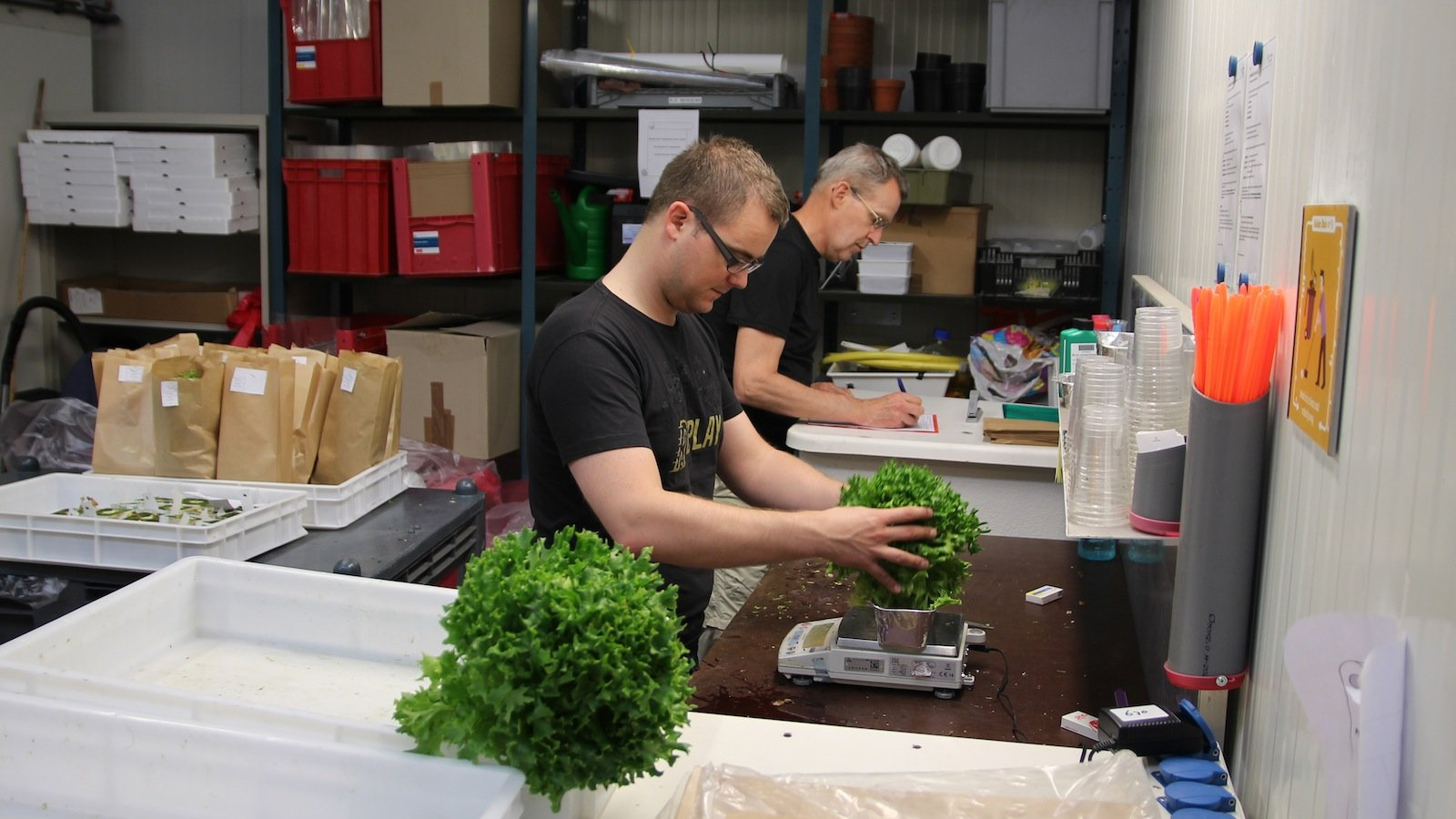 Bevor DLR-Ingenieur Paul Zabel (vorne) für ein Jahr lang ein Gewächshaus in der Antarktis betreiben wird, lernt er, wie das Gemüse fachgerecht geerntet und vermessen wird.