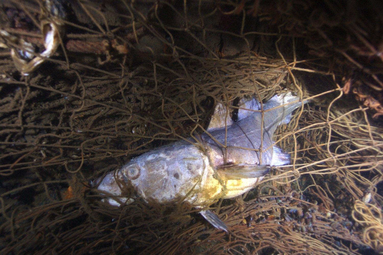 Für Fische werden die Geisternetze zur lautlosen Todesfalle. Allein in der Ostsee landen jedes Jahr bis zu 10.000 herrenlose Netze auf dem Meeresboden.