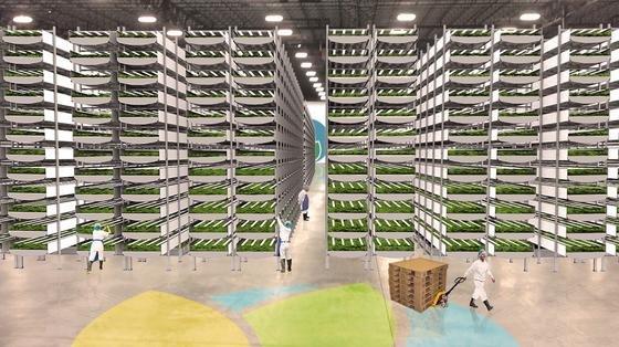 In 24 m hohen Türmen in einer einstigen Lagerhalle baut das Unternehmen AeroFarms Gemüse an. Jährlich sollen 1000 Tonnen geerntet werden.