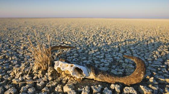 Welterschöpfungstag 2016: Am 8. August sind alle Ressourcen aufgebraucht, die die Erde noch ersetzen könnte. Schon 2030 würde die Menschheit zwei blaue Planeten benötigen,um ihren Bedarf an Nahrung und nachwachsenden Rohstoffen decken zu können.