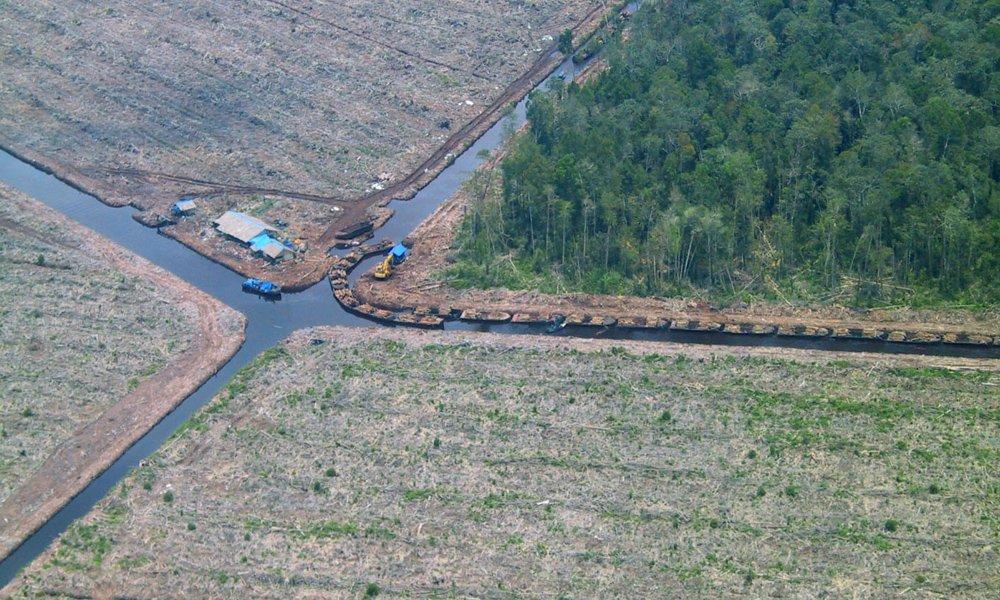 Abgeholzter Regenwald in Indonesien.