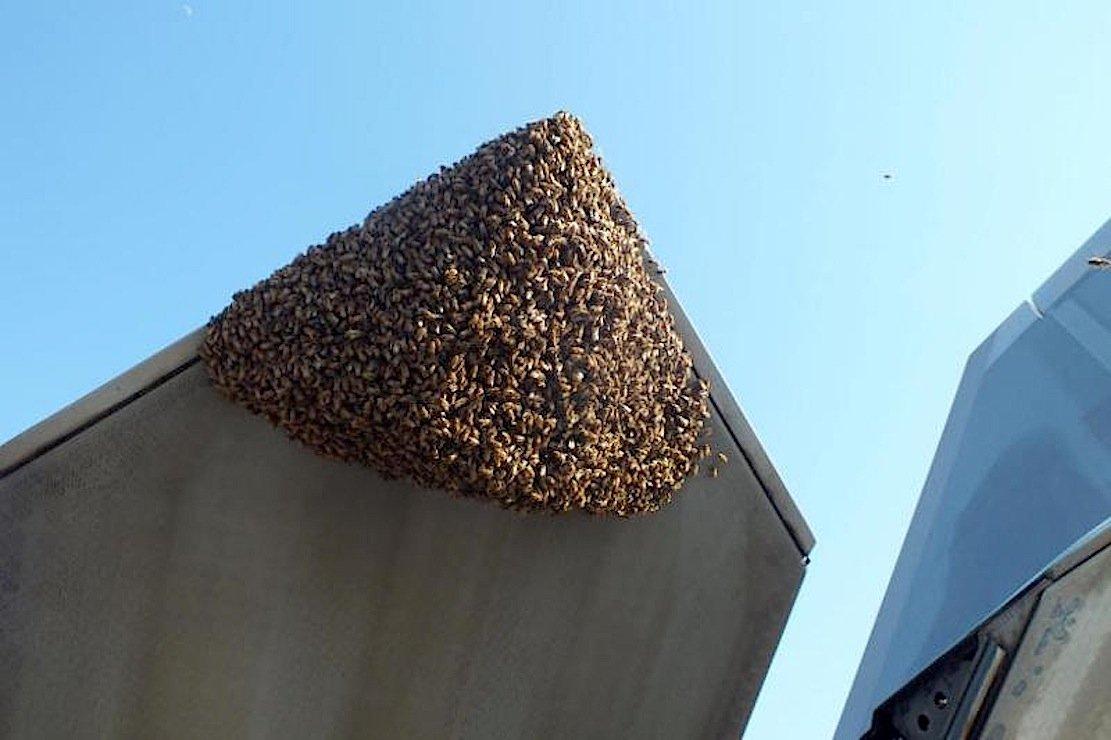 Blinde Passagiere: Die Honigbienen hatten sich auf der Schubdüse der F-22 niedergelassen.