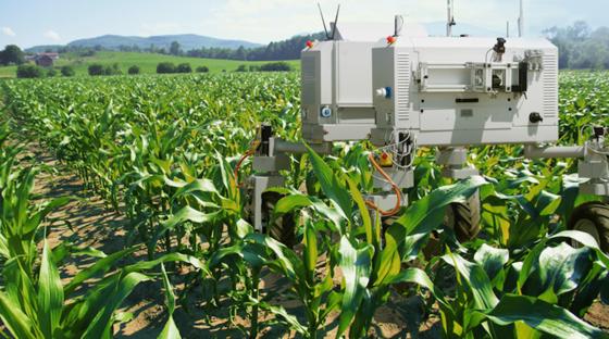 Bonirob bei der Arbeit auf dem Feld: Die Maschine kann zwischen Nutzpflanzen und Unkraut unterscheiden. Letzteres wird zielsicher vernichtet.
