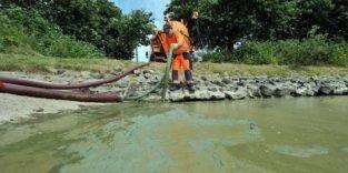 Bessere Wasserqualität: Giftige Algen bald ohne Chance
