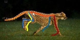 Ruckzuck vom Videobild zur frei animierbaren 3D-Tierfigur