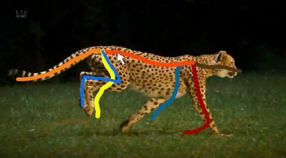 Ganz gleich, ob sich ein Gepard durch eine Grassavanne bewegt, eine Giraffe über die Steppe läuft oder eine Elefantenherde die Straße überquert: Immer genügen wenige farbige Striche, um das grundlegende Stützskelett zu erzeugen. Dafür haben die Wissenschaftler eine Benutzeroberfläche entwickelt, die wie ein einfaches Malprogramm funktioniert.