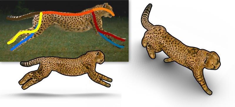Sechs Striche genügen der Software aus Saarbrücken, um aus einem Videobild ein dreidimensionales Tiermodell zu erstellen.