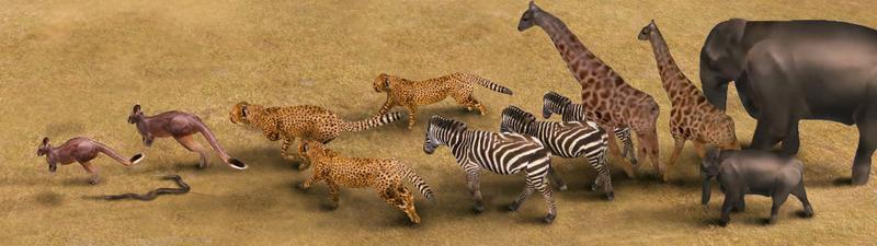 Real gefilmte Tiere werden zu animierbaren 3D-Figuren. Die Saarbrücker Forscher haben ihre Software inzwischen an verschiedenen Tier-Videoclips getestet, die sie auf Videoplattformen wie YouTube fanden und haben so einen ganzen Zoo an 3D-Tiermodelle angelegt.