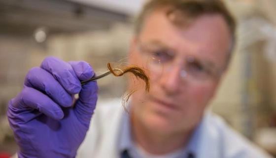 Forscher Glendon Parker mit einer 250 Jahre alten Haarprobe: Er und sein Team haben eine Methode entwickelt, mit der sich anhand von Haarproteinen Menschen identifizieren lassen.