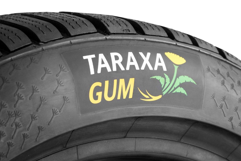 Der Reifen aus Löwenzahn hat auch schon ein eigenes Label: Taraxa Gum.