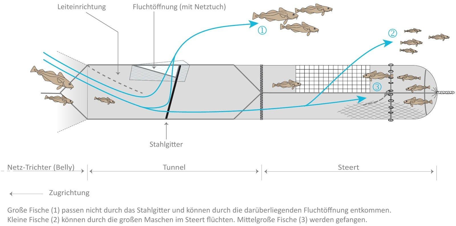 Grafik zum selektiv nach Größen fangenden Netz.