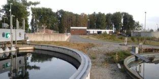 In Wolfsburg wird Gemüse in Abwasser angebaut