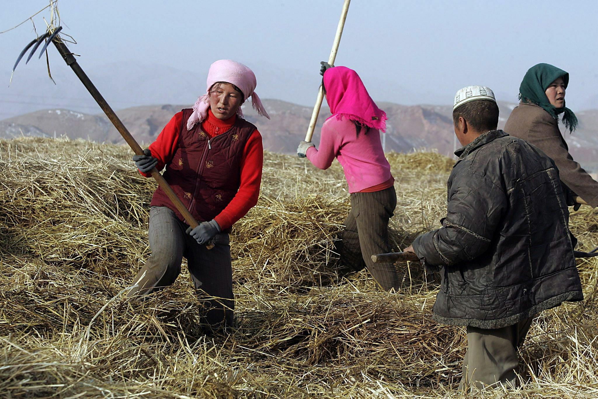 Chinesische Bauern im Nordwesten des Landes: China verfolgt viele von der Kommunistischen Partei vorgegebene langfristige Ziele und hat es geschafft, die große Armut des Landes in nur wenigen Jahrzehnten in großen Teilen zu beseitigen.