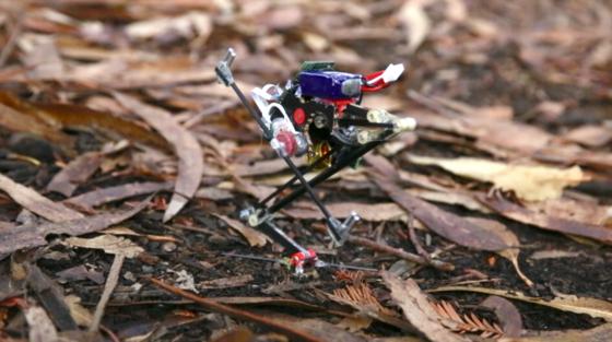 Roboter Salto: Klein, aber ein Ausbund an Sprungkraft. Vorbild sind die Galagos aus der Gruppe der Feuchtnasenaffen. Sie werden auch Buschbabys genannt.