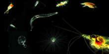 Den kleinsten Meeresbewohnern rund um die Uhr auf der Spur