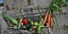 Erster Foodtruck mit geretteten Bio-Lebensmitteln rollt an